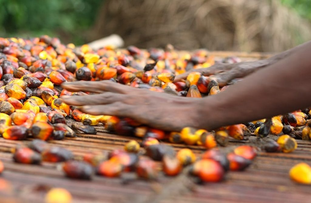feature-palm-oil-africa-main